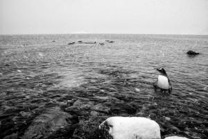 Fotoreportaże - Środowisko